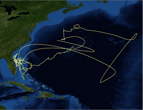 Tiger shark migration in the Northwest Atlantic revealed through satellite tagging. Modified from Hammerschlag et al. (2012), Functional Ecology, 26(3): 567-576